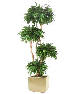 8' Layered Mango Tree in Square Glazed Ivory Stoneware Planter