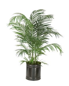 4' Areca Palm in Round Metal Planter
