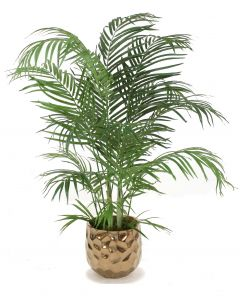 4' Areca Palm in Large Burnt Gold Gabi Planter