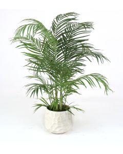 4' Areca Palm in Large White Gabi Planter
