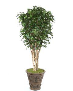 11' Deluxe Ficus Tree in Cedarwood Finish Fiberglass Garden Planter