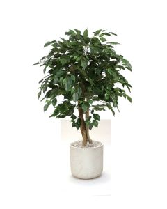 4' Ficus Tree in Grey Stone Charlie Planter