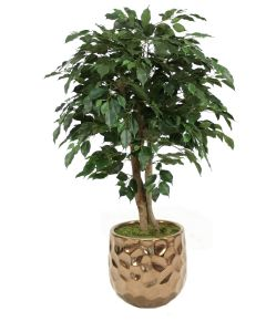 4' Ficus Tree in Burnt Gold Gabi Planter