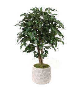 4' Ficus Tree in White Gabi Planter
