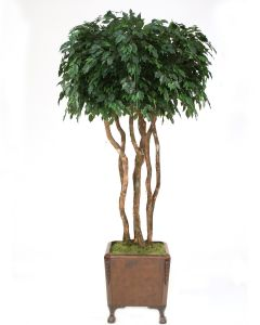 8' Canopy Ficus in Brown Faux Leather Finish Chateau Planter with Claw Feet