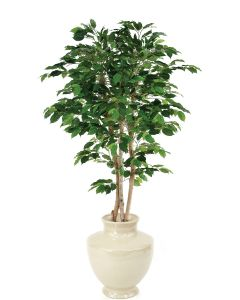 5' Green Ficus Tree in Shellish Sand Earthenware Planter