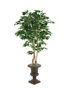 "5' Green Ficus Tree in 15"" Rust Classic Fiberglas Urn"