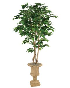 5' Green Ficus Tree in Tan Finish Resin Classic Urn