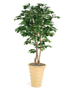 5' Green Ficus Tree in Mustard Glazed Stoneware Planter