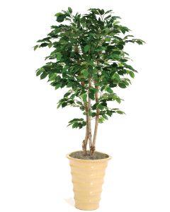 5' Green Ficus Tree in Mustard Glazed Stoneware Planter