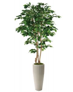 5' Green Ficus Tree in Glazed White Earthenware Highland Floor Vase