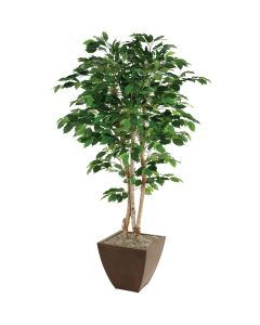 5' Green Ficus Tree in Square Bronze Metal Contempo Planter