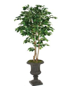 7' Deluxe Ficus Tree in Rust Finish Resin Classic Urn