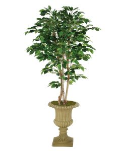 7' Deluxe Ficus Tree in Tan Classic Urn