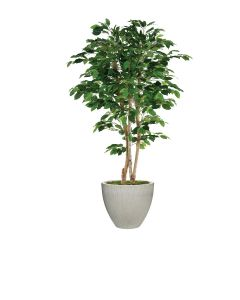 7' Deluxe Ficus Tree in Light Grey Vertically Ridge Planter