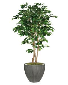 7' Deluxe Ficus Tree in Dark Grey Vertically Ridge Planter