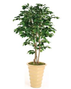 7' Deluxe Ficus Tree in Mustard Glazed Stoneware Planter