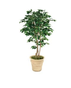 7' Deluxe Ficus Tree in Sierra Beige Garden Pot
