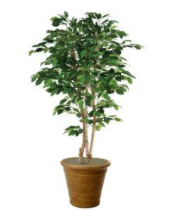 7' Deluxe Ficus Tree in Tuscan Brown Garden Pot