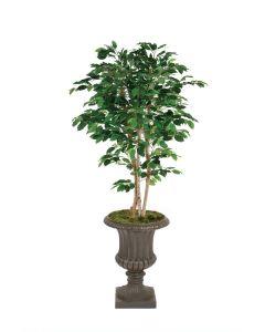 6' Deluxe Ficus Tree in Rust Classic Urn