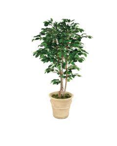 6' Deluxe Ficus Tree in Sierra Beige Garden Planter