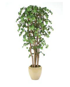7' Ginko Tree In Glazed Sand-Color Stoneware Pot