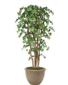 7' Ginko Tree in Brown Rimmed Stoneware Planter