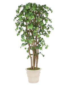 7' Ginko Tree in Brown Clay Garden Planter