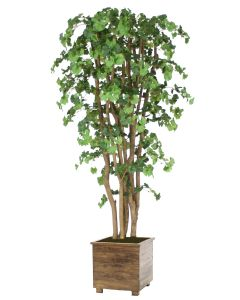 7' Ginko Tree in Square Stained Wood Planter with Feet