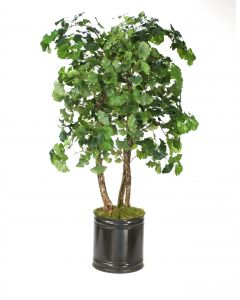 4' Ginko Tree in Bronze Metal Planter