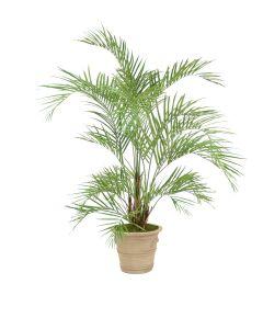 6.5' Areca Palm in Natural Stone Garden Planter