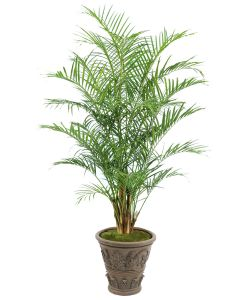 8' Areca Palm in Large Cedarwood Finish Fiberglas Planter