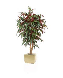 5' Red Capensia Tree in Square Glazed Ivory Stoneware Planter
