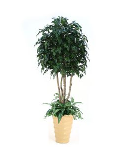 8' Ficus Tree with Ground Cover in Mustard Glazed Flared Stoneware Planter