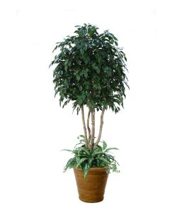 8' Ficus Tree with Ground Cover in Tuscan Brown Fiberglas Patio Pot