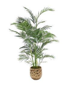 6' Areca Palm in Large Burnt Gold Gabi Planter