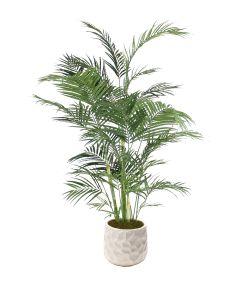 6' Areca Palm in Large White Gabi Planter