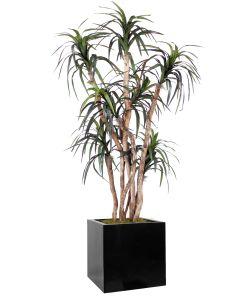 6.5' Dracaena Tree in Block Planter