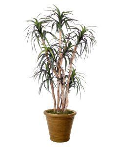 6.5' Dracaena Tree in Tuscan Brown Terracotta Patio Pot