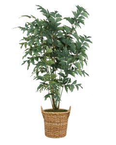 7' Fishtail Palm Tree in Natural Round Core Arrorog Rattan Basket with Handles