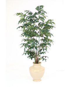 6' Fishtail Palm Tree in Shellish Sand Planter