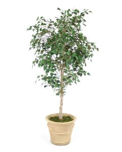 7.5' Birch Tree in Sierra Beige Garden Planter
