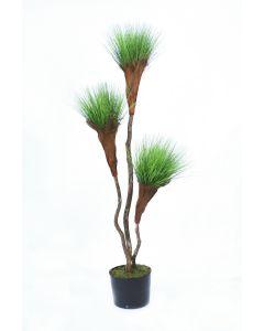 7' Grass Pom Pom Tree in Black Plastic Nursery Liner