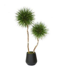 8' Natural Blade Pom Pom Tree in Black Fiberstone Planter