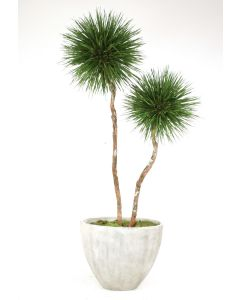 8' Natural Blade Pom Pom Tree in White-Gray Washed Oval Tapered Concrete Planter