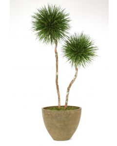 8' Natural Blade Pom Pom Tree in Tuscan Brown Oval Tapered Concrete