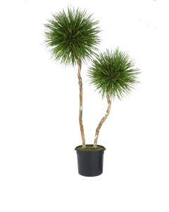 8' Natural Blade Pom Pom Tree in Liner
