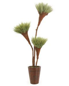 7' Basil Grass Pom Tree X3 in Tapered Rattan