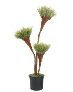 7' Basil Grass Pom Pom in Black Plastic Nursery Liner