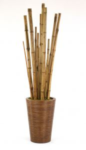 8' Bamboo Tree in Tapered Rattan